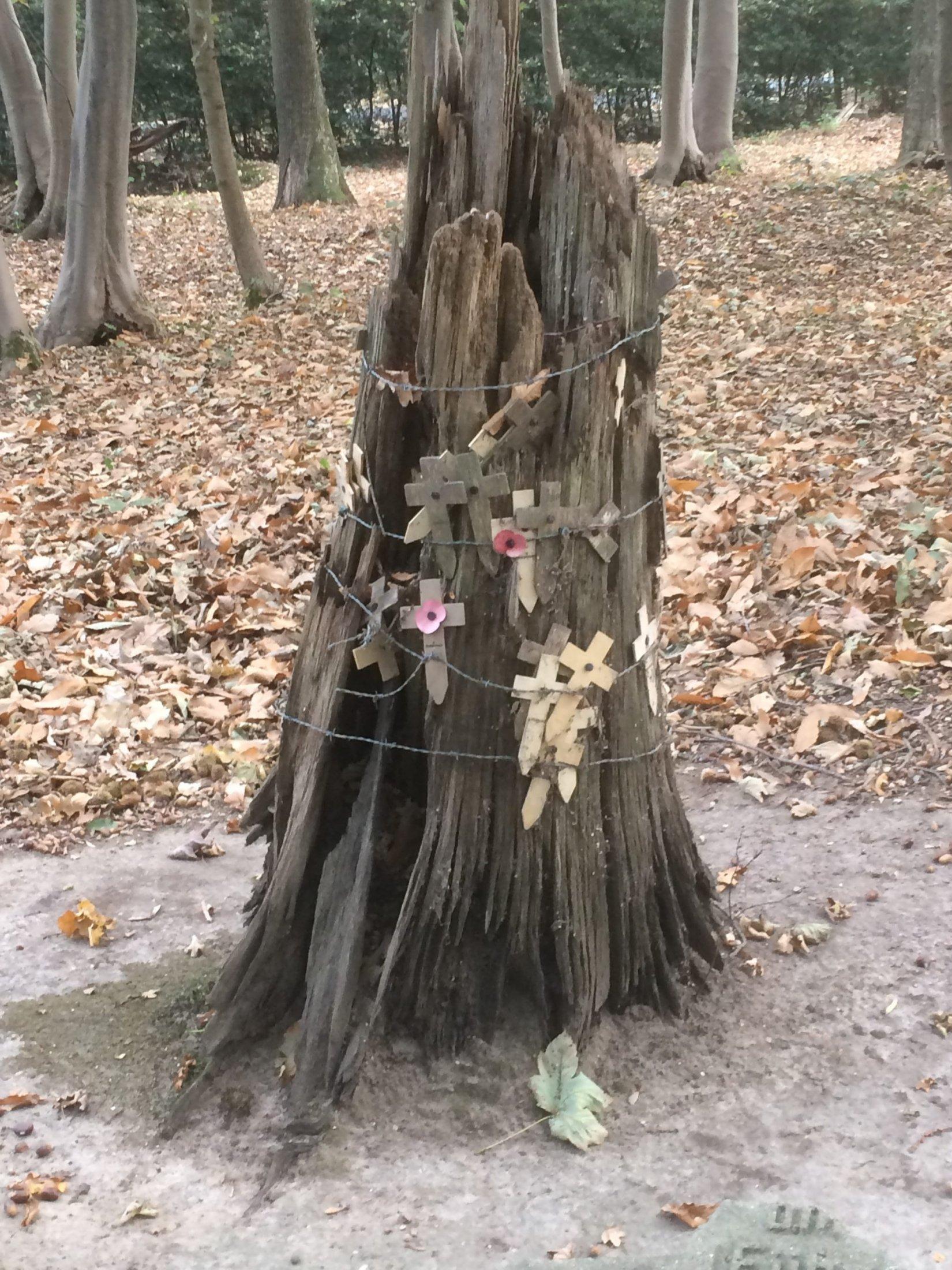 Hill 62 Surviving tree stump