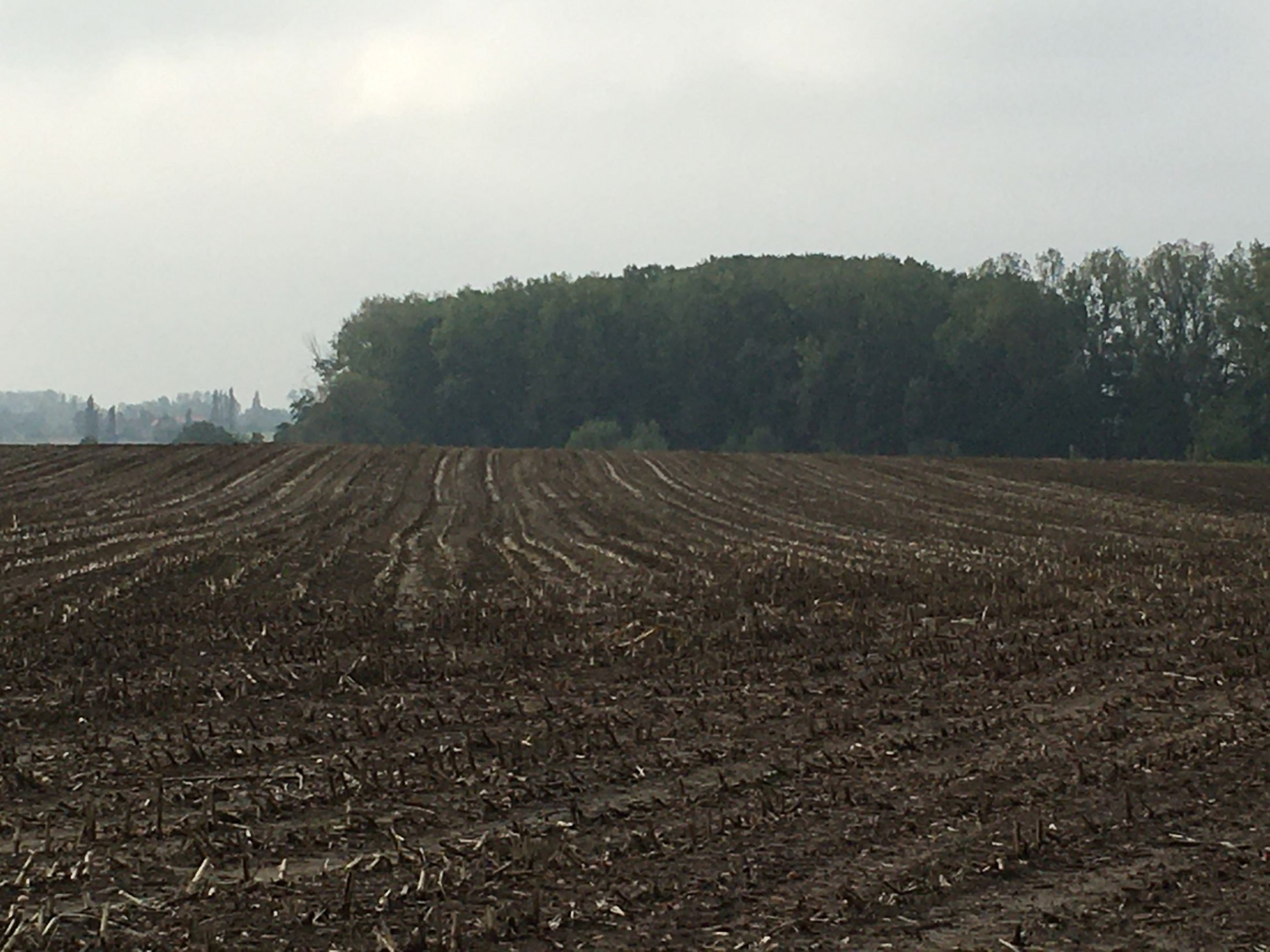 Polygon Wood looking South Where Sgt Arthur Monk and his comrades assembled Oct 1917.