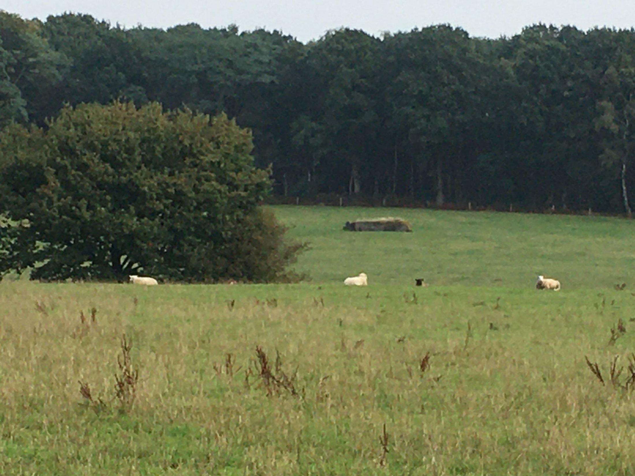Polygon Wood with German Bunker (Sgt Arthur Monk)