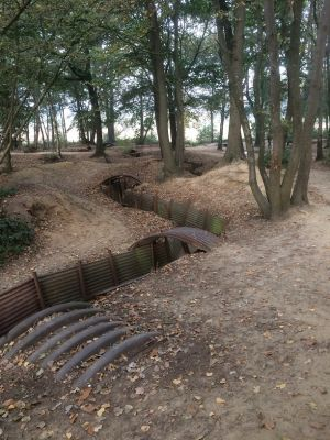 Trenches Meandering Through Sanctuary Wood (Hill 62)
